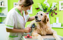 Pet Groomers Insurance